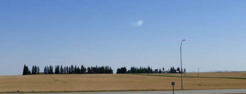 Golden fields of Alberta grain.