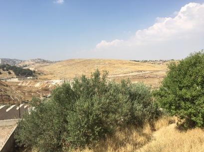The Shepherd's Field. (Photo © 2019 by V. Nesdoly)
