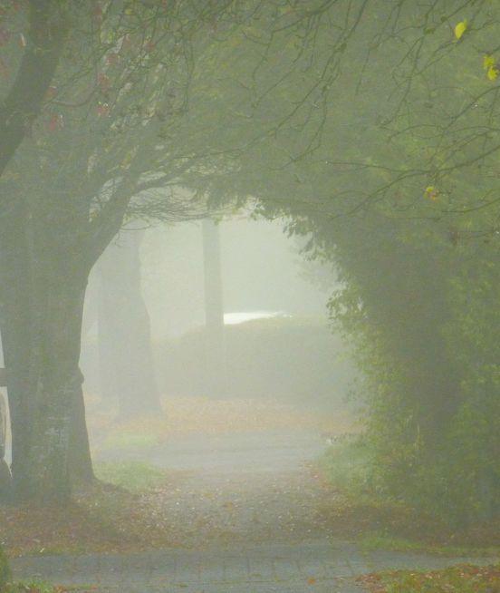 A foggy walkway