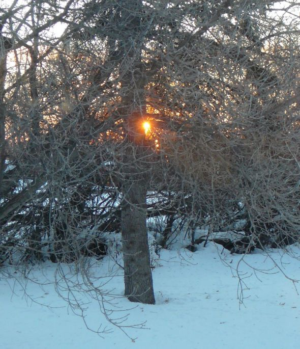 sunrise through branches