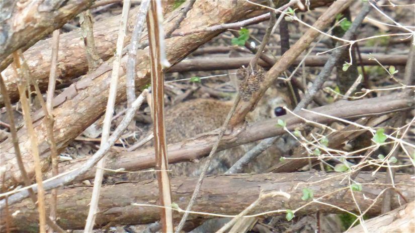 Hiding rabbit
