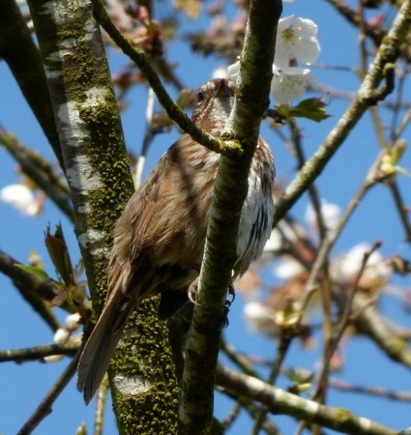 bird in blossoming tree