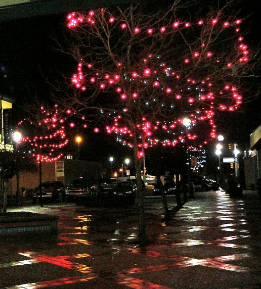 Night scene with lit-up tree
