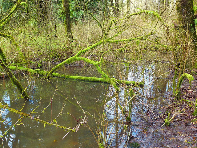 mossy branch arcs over water