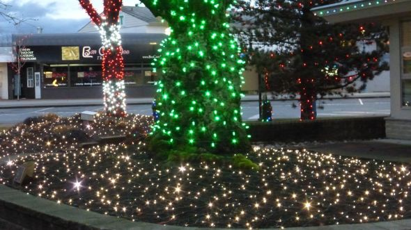 Lighted trees in Douglas Park - Langley, BC, Canada