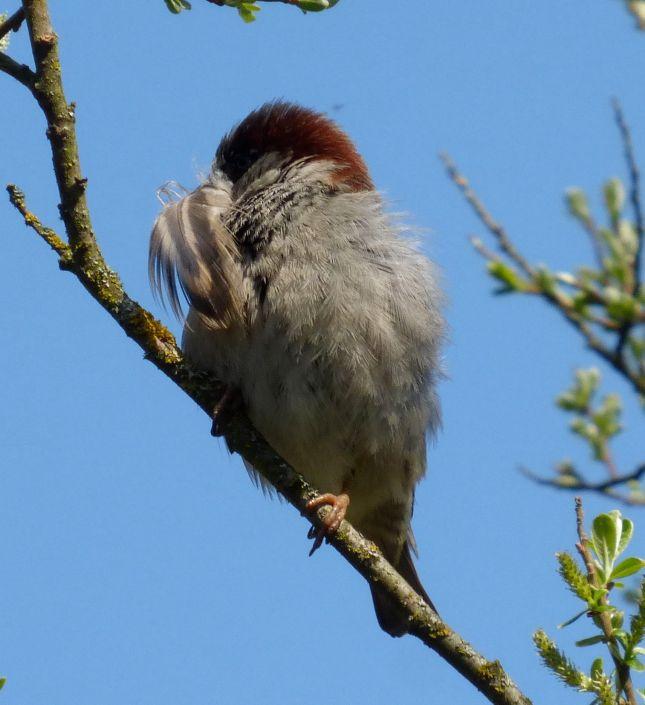 Bird with feather in beak