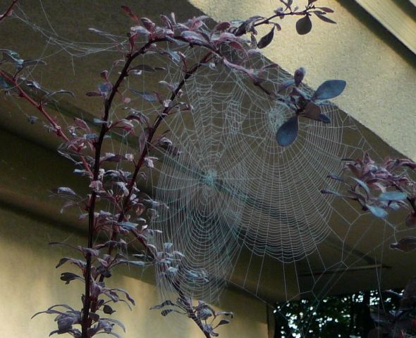 Spider web in branches