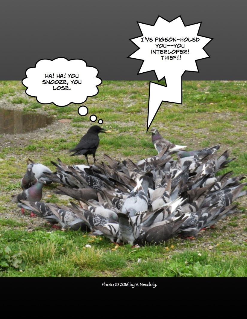carrier-pigeon-illus